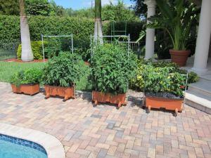 A pool-side EarthBox farm. Photo from amazingtomatoes.com.